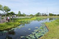 水郷佐原水生植物園 2