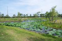 水郷佐原水生植物園 3
