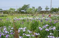 水郷佐原水生植物園 6