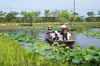 水郷佐原水生植物園 4