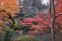成田山公園 6
