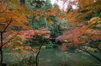 成田山公園 7
