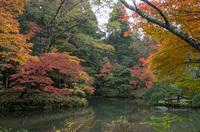 成田山公園 8