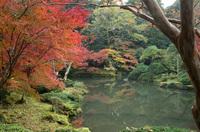 成田山公園 9