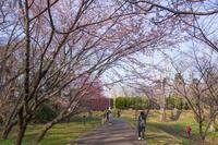 佐倉城址公園 1