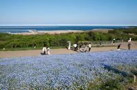国営ひたち海浜公園 5