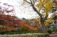 成田山公園 4