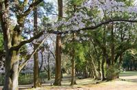 泉自然公園 4