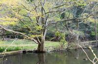 泉自然公園 7