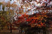 青葉の森公園 6