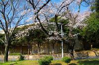 千葉公園 4
