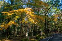 成田山公園 1