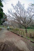 青葉の森公園 5