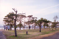 千葉ポートパーク 6