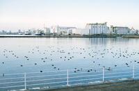 千葉ポートパーク 3
