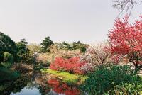 清水公園 1