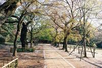 清水公園 6