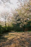 清水公園 8