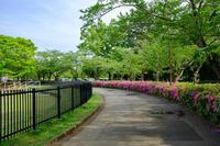 四街道総合公園 1