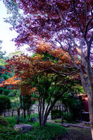 佐倉城址公園 5