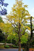 千葉公園 3