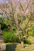 佐倉城址公園 2