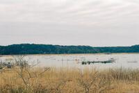 双子公園(印旛沼)