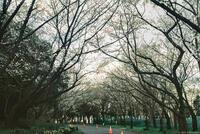 千葉ポートパーク 1