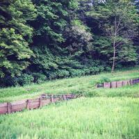 佐倉城址公園 3